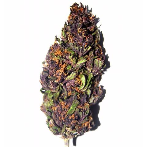 Purple Haze Seeds - Cannabis
