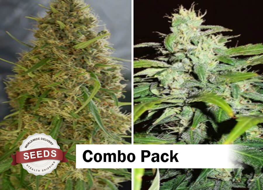 Combo Pack Seeds - Cannabis